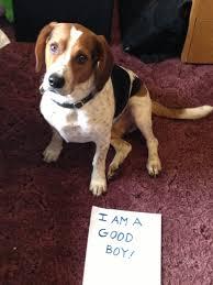 Dog Shaming Meme - anti dog shaming movement picks up steam earlier
