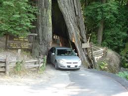 can you drive through a tree wonderopolis