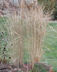 growing ornamental landscape grasses in minnesota