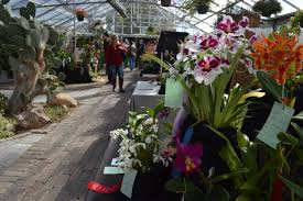 orchids for sale photo gallery eastern iowa orchid show sale homegrown iowan