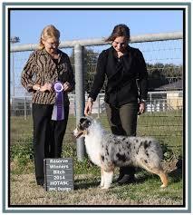 2 g rose australian shepherds cedar hill website