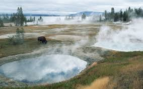 best national parks for wildlife spotting travel leisure