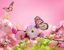 monarch butterfly butterflies flowers flowering trees