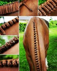 hairstyles for horses best 25 horse mane braids ideas on pinterest horse mane horse