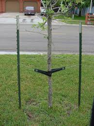 tree stakes horticulture for july 11 2002