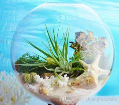 wall hanging glass plant kits terrarium with plant and moss wall