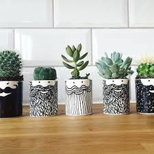 best 25 buy cactus ideas on cactus
