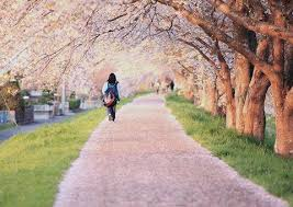 japan flower tunnel 15 of the world s most beautiful tree tunnels and how to get there