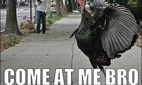 Thanksgiving Turkey Meme - 14 thanksgiving memes to help you survive the holiday with your family