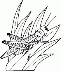insects kids coloring pages coloring