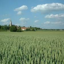 chambre d agriculture nord les filières végétales poids lourd des hauts de nord pas
