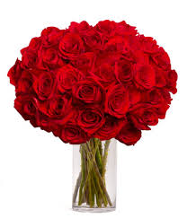 stem roses 50 stunning stemmed roses at from you flowers