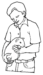 coloring page guinea pig animals coloring pages 3