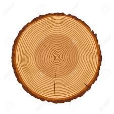 wood tree rings images Tree rings tree trunk rings isolated wood ring texture tree jpg