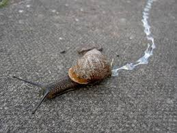 Where Can You Find Snails In Your Backyard How Are Slugs And Snails Different Wonderopolis