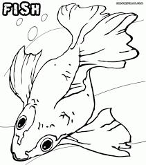 x ray fish coloring page wallpaper download cucumberpress com
