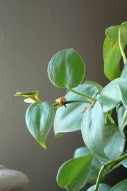 these common houseplants can harm your animal peta