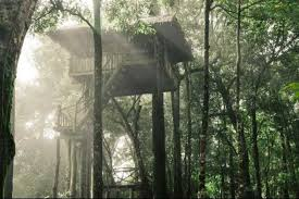 7 beautiful treehouse hotels  Top 10  Construction Global