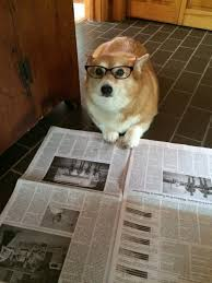 Dog With Glasses Meme - dogs wearing glasses page 1 of 60