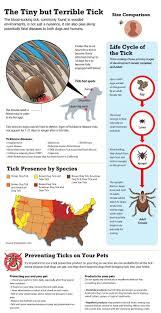 how to remove a tick from a dog parasites and your pooch