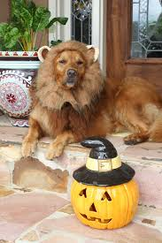 halloween express oklahoma city buy animal planet lion pet costume