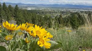 montana native plant society pollinators soil and water conservation districts of montana
