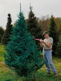 trend of real painted christmas trees comes to upstate ny