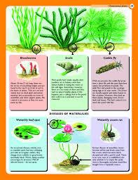 home gardener s garden pests diseases identifying and
