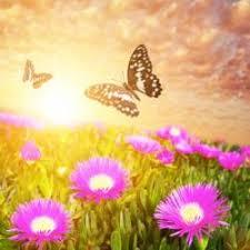 butterflies winged spiritual messengers