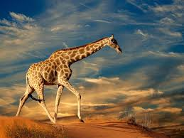 Desktop Hd Free Pictures Animals Animals Hd Wallpapers Free