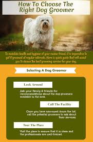 how to choose the right dog groomer