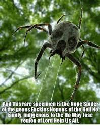 Sad Spider Meme - 25 best memes about family family memes