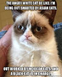 White Cat Meme - the angry white cat be like i m being out smarted by asian cats