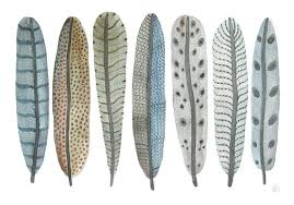 the curious extravagant evolution of feathers