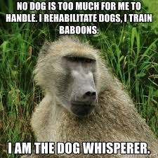 Baboon Meme - no dog is too much for me to handle i rehabilitate dogs i train