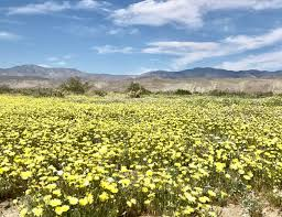 anza borrego desert state park update super bloom u2013 travels with