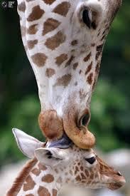 110 best animals images on pinterest animal kingdom backyard