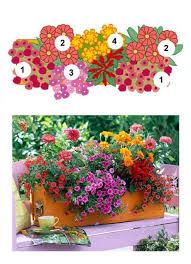 blumen fã r balkon 136 besten garten bilder auf gartenpflanzen pflanzen