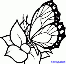 how to draw a butterfly on a flower butterfly and flower step by