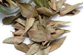 dried bay leaves free stock image