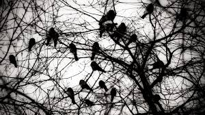 a murder of crows when roosting crows come to town cool green
