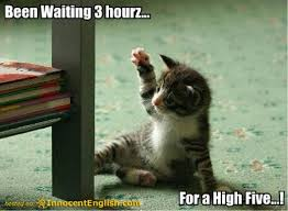 Funny Kitten Meme - funny animals zone funny kittens with captions images 2012