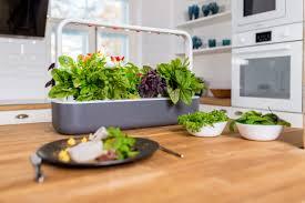 100 click and grow garden click and grow kleiner kr磴uter