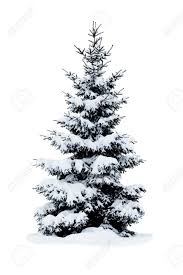christmas tree with snow christmas tree covered with snow isolated on white background