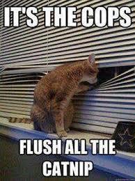 Marijuana Meme - photos top twenty favorites on the marijuana memes facebook page