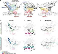 Cpp Map X U2010ray And Cryo U2010em Structures Reveal Mutual Conformational Changes