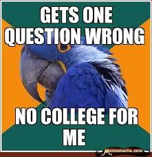 78 best paranoid parrot memes images on pinterest ha ha funny