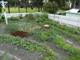 garden experimenting as we grow