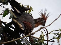 amazon jay bird black friday 49 best birds in ohio images on pinterest ohio backyard birds
