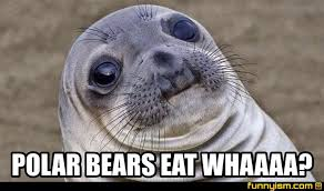 Bear Stuff Meme - polar bears eat whaaaa meme factory funnyism funny pictures